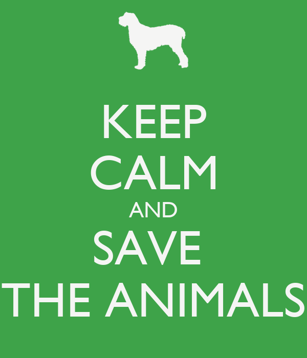 KEEP CALM AND SAVE THE ANIMALS Poster  Edilson Junior ...