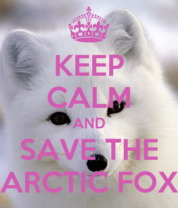 KEEP CALM AND SAVE THE ARCTIC FOX - KEEP CALM AND CARRY ON Image ...