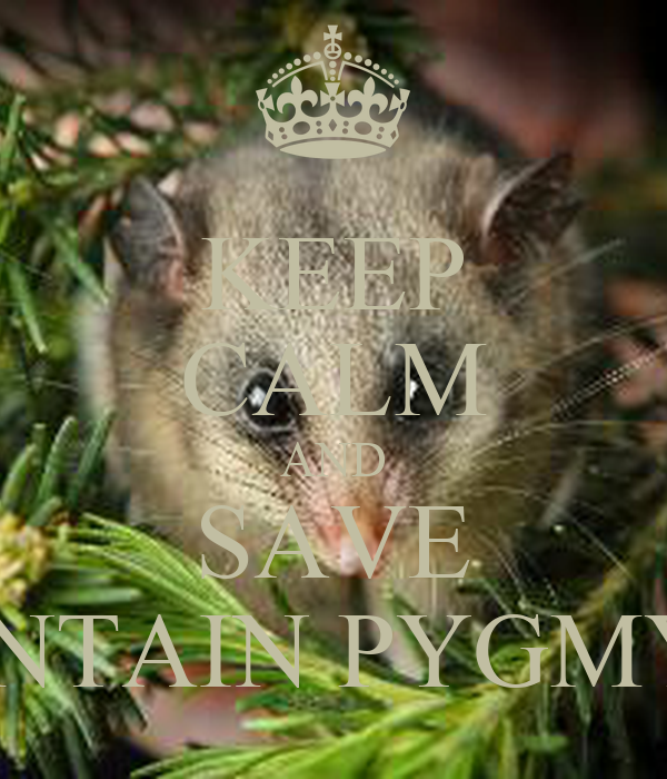 keep calm and save the mountain pygmy possum poster
