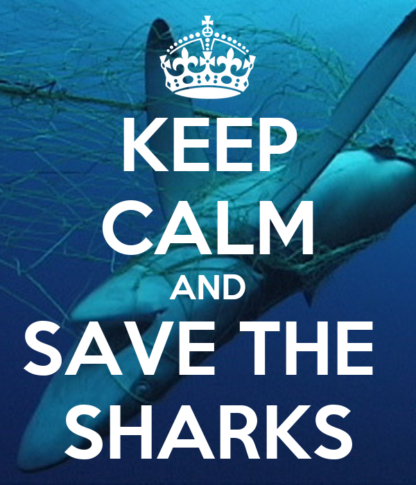 KEEP CALM AND SAVE THE SHARKS Poster | jasminegardiner ...