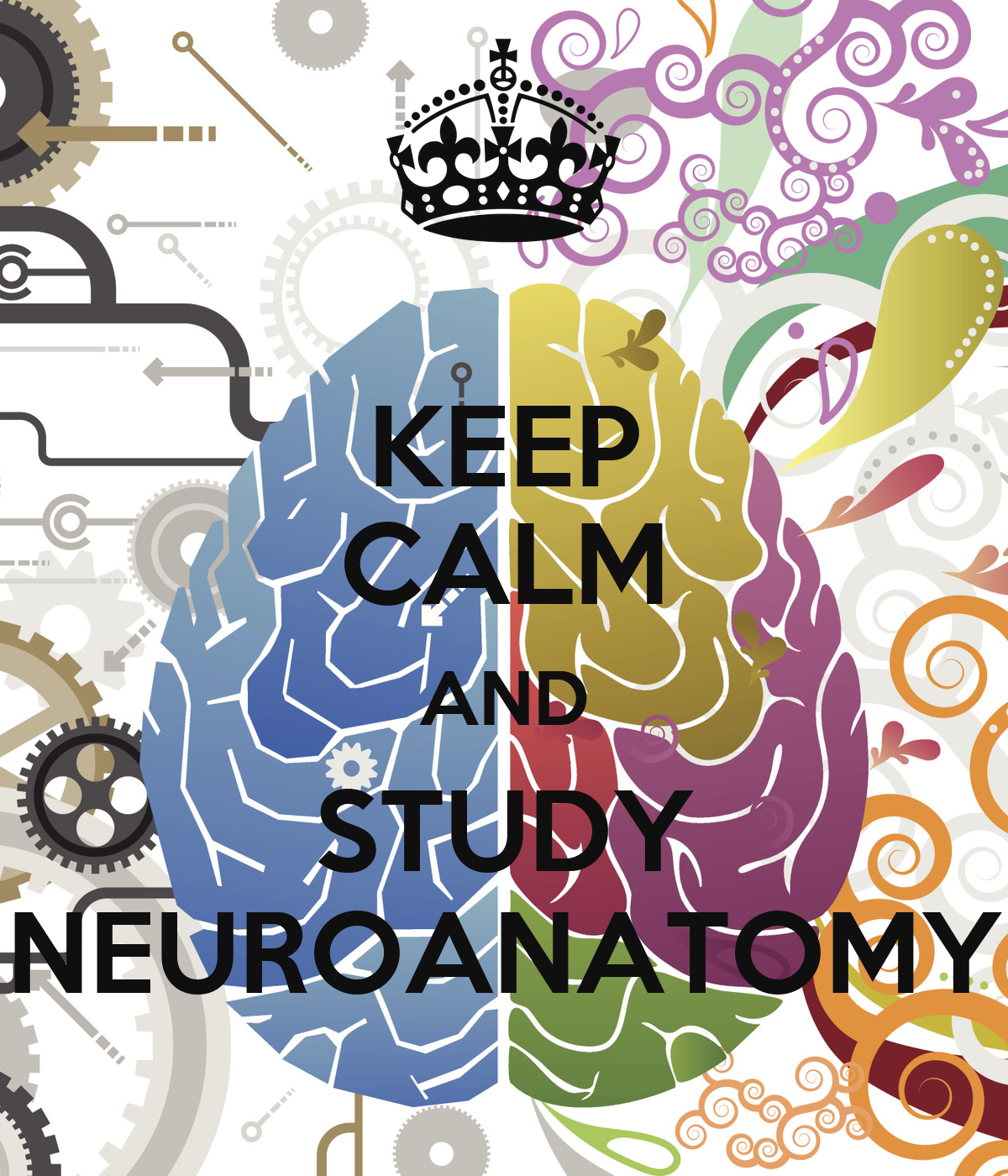 How to Study Neuroscience in Medical School - YouTube