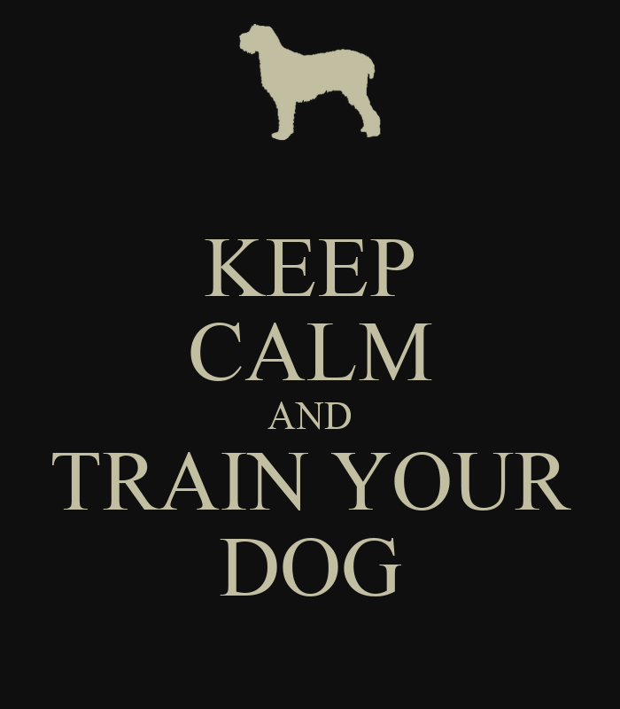 Image result for train your dog