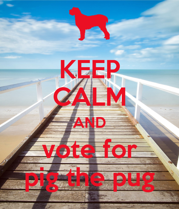 KEEP CALM AND vote for pig the pug - KEEP CALM AND CARRY ...