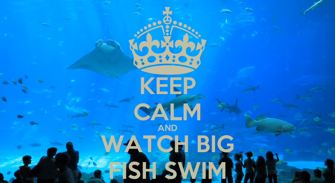 keep calm and watch big fish swim poster kim loves eline