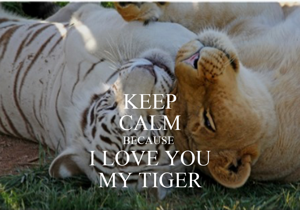 keep calm because i love you my tiger poster lion1112