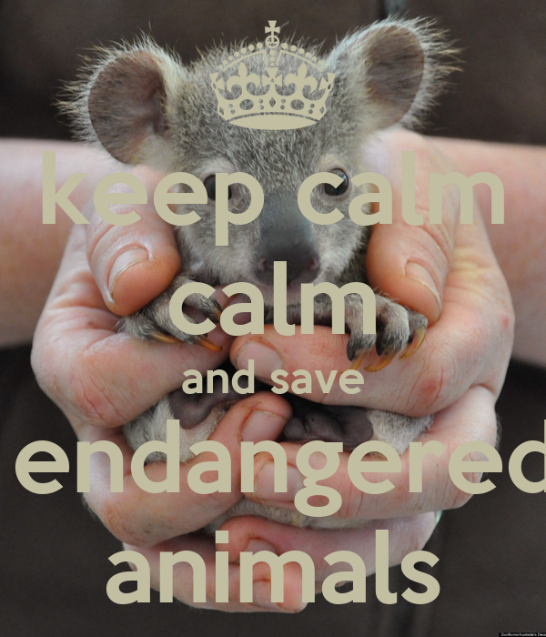 how to save endangered animals This is our save the animals website we designed it as part of a mis munich international school project to encourage our classmates to find out more about endangered animals around the world, and to learn what they can do to help save them.