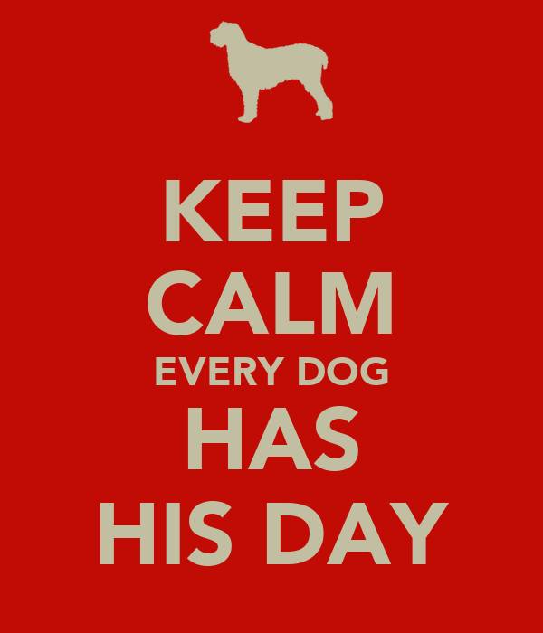 every dog has his day Every dog has his day by jenn mckinlay is the third novel in the bluff point romance series a kitten named chaos, two adorable little girls and a well-developed, slow-burning romance left me grinning from ear to ear.
