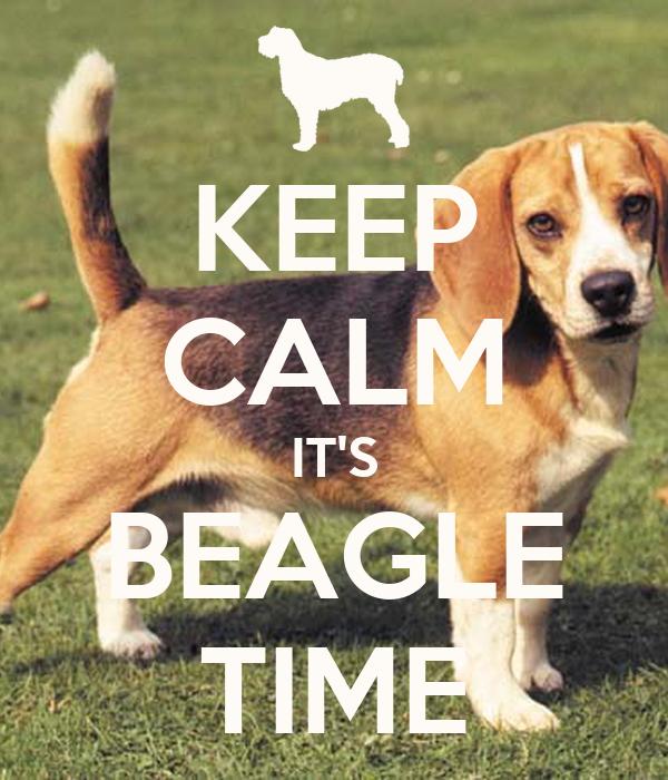 how to keep a beagle entertained