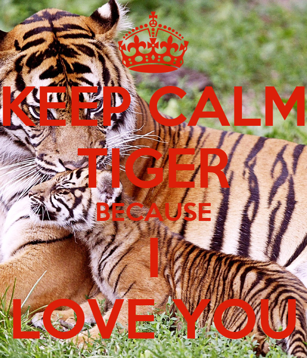 keep calm tiger because i love you poster tzz keep