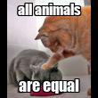 all animals are equal - Personalised Tea Towel: Premium