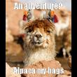 An adventure? Alpaca my bags - Personalised Tea Towel: Premium
