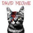DAVID MEOWIE - Personalised Tea Towel: Premium