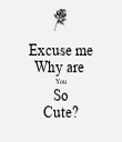 Excuse me Why are  You So Cute? - Personalised Tea Towel: Premium