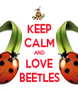 KEEP CALM AND LOVE BEETLES - Personalised Tea Towel: Premium