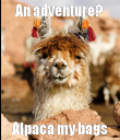 An adventure? Alpaca my bags - Personalised Poster large