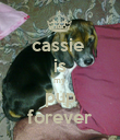 cassie  is my pup forever - Personalised Poster large