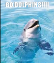 GO DOLPHINS!!!!  - Personalised Poster large
