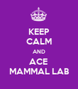 KEEP CALM AND ACE  MAMMAL LAB - Personalised Poster large