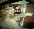 KEEP CALM AND like cat - Personalised Poster large