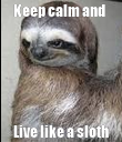 Keep calm and   Live like a sloth - Personalised Poster large