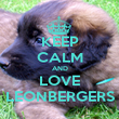 KEEP CALM AND LOVE LEONBERGERS - Personalised Poster large