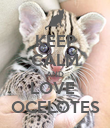 KEEP CALM AND LOVE  OCELOTES - Personalised Poster large