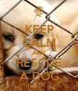 KEEP CALM AND RESCUE A DOG - Personalised Poster large