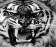 KEEP CALM ME TIGER  - Personalised Poster large