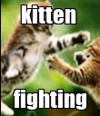 kitten  fighting - Personalised Poster large