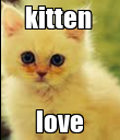 kitten  love - Personalised Poster large