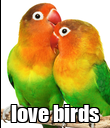 love birds - Personalised Poster large