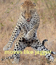 moves like jagger - Personalised Poster large