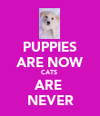 PUPPIES ARE NOW CATS  ARE  NEVER - Personalised Poster large