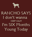 RANCHO SAYS I don't wanna   KEEP CALM I'm SIX Months Young Today - Personalised Poster large