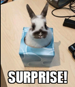 SURPRISE! - Personalised Poster large