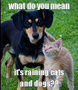 what do you mean it's raining cats and dogs?? - Personalised Poster large