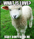 WHAT IS LOVE? BABY DON'T HERD ME - Personalised Poster large