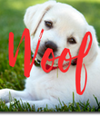 Woof - Personalised Poster large