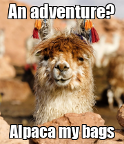 An adventure? Alpaca my bags - Personalised Large Wall Decal