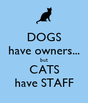 DOGS have owners... but CATS have STAFF - Personalised Poster large