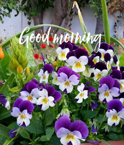 Good morning    - Personalised Poster large