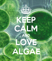 KEEP CALM AND LOVE ALGAE - Personalised Large Wall Decal