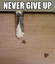 NEVER GIVE UP  - Personalised Poster large