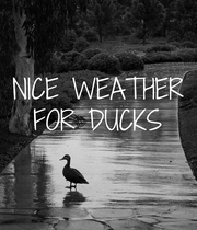 NICE WEATHER FOR DUCKS  - Personalised Poster large