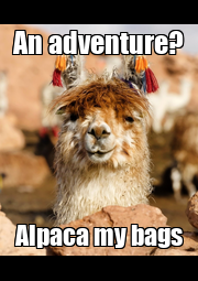 An adventure? Alpaca my bags - Personalised Poster A4 size