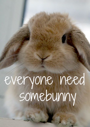everyone need  somebunny - Personalised Poster A1 size