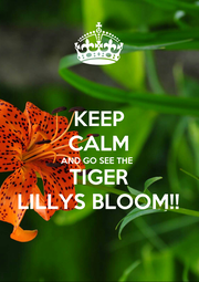 KEEP CALM AND GO SEE THE  TIGER LILLYS BLOOM!! - Personalised Poster A1 size
