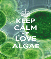 KEEP CALM AND LOVE ALGAE - Personalised Poster A4 size