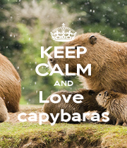 KEEP CALM AND Love  capybaras - Personalised Poster A1 size