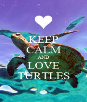 KEEP CALM AND LOVE TURTLES - Personalised Poster A4 size